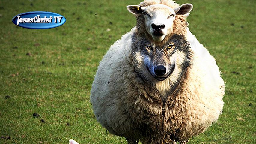 Loup dans la bergerie